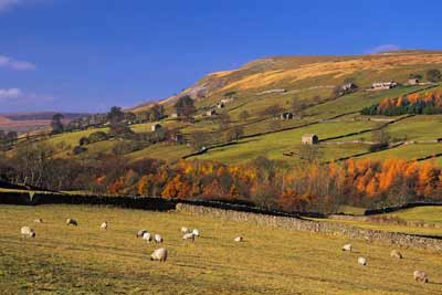 5375_Autumn in Swaledale