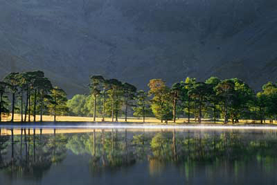 Sunlit Trees, Buttermere