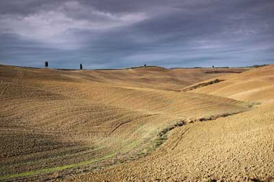 11451-Cypruses and Field Patterns,san-quirico