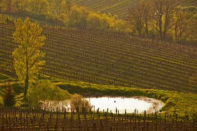 2718_Vineyard-Evening