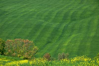 2904_Field-patterns